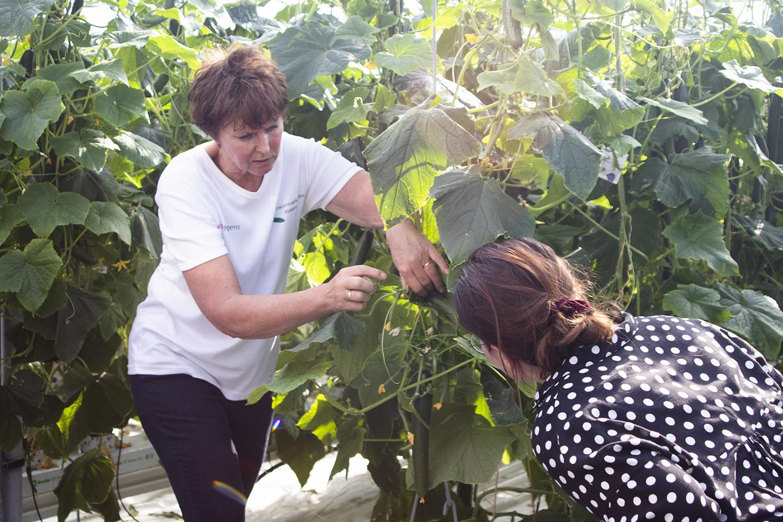 uitleg komkommerkwekerij