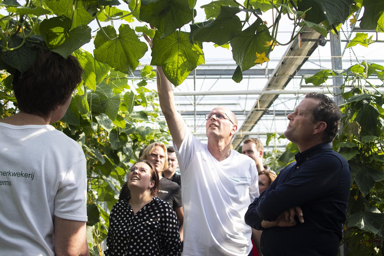 workshop over een komkommerkwekerij